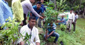মোরেলগঞ্জে ৩০৭ টি সরকারি প্রাথমিক বিদ্যালয়ে ১৬ শ' গাছ রোপন