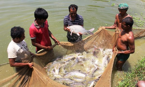 bangladeshy fish