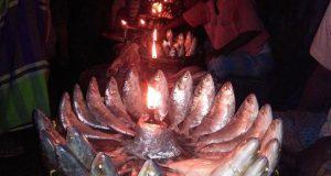 মেঘনায় ধরা পড়ছে ঝাঁকে ঝাঁকে রূপালী ইলিশ: সাধারণ মানুষের নাগালে