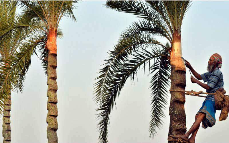 গ্রামবাংলার প্রাণোচ্ছলতায় খেজুর রসের উপাখ্যান