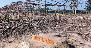 মাটিরাঙ্গায় সেগুন গাছ কাটা নিয়ে কোটি টাকার বাণিজ্যে