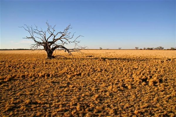 Inclusive cooperation to combat desertification