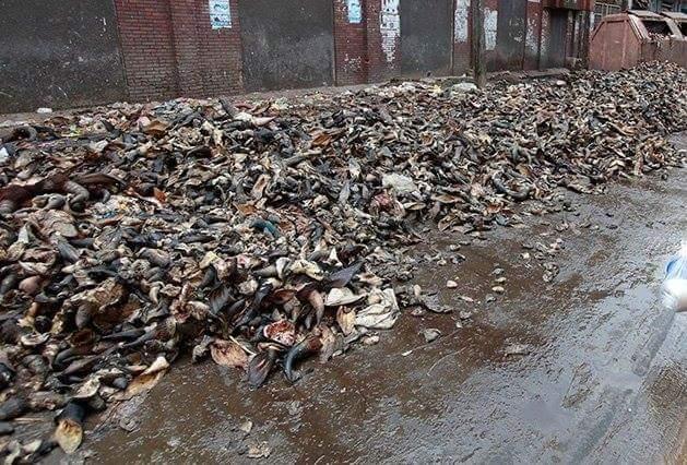 d al-Adha and the environmental concern for Dhaka city