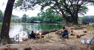 কেশবপুরে সরকারি রাস্তার কয়েক লাখ টাকার গাছ জব্দ
